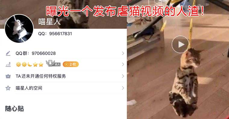 曝光虐猫视频资源下载