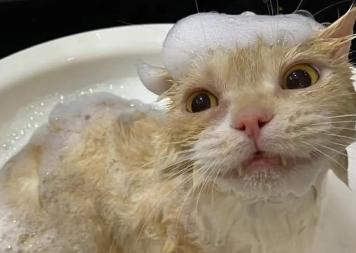 每当给猫洗澡的时候,别人都说我在虐猫