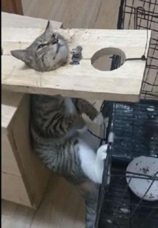 卧底入群,找到虐猫视频200部,曝光发布虐猫视频人渣!