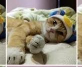 老一辈的人养猫能力更强