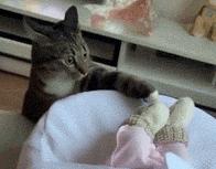 当猫见到主人生了儿子时,会有什么反应?