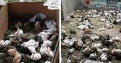 手续不过关导致数千只宠物滞留物流园死亡