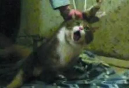 虐猫视频公开叫卖,阿弥陀佛,邪风不除,社会受害
