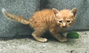 没有养猫的条件就别轻易养猫,否则很容易形成虐猫行为