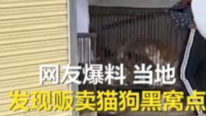 猫咪被肉贩子运到外省,主人据GPS救猫生天