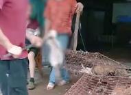 柳州大概十几家猫肉餐馆开在一起虐杀猫卖肉
